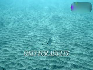 性感小萝莉们穿透视装潜水裸泳
